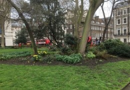 Park near Bloomsbury training venue